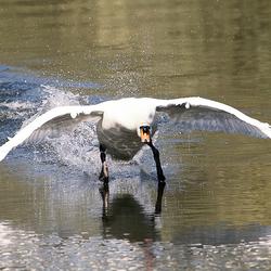 One angry bird