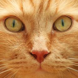 Cat's eyes...
