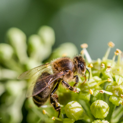 Bloemetjes en bijtjes
