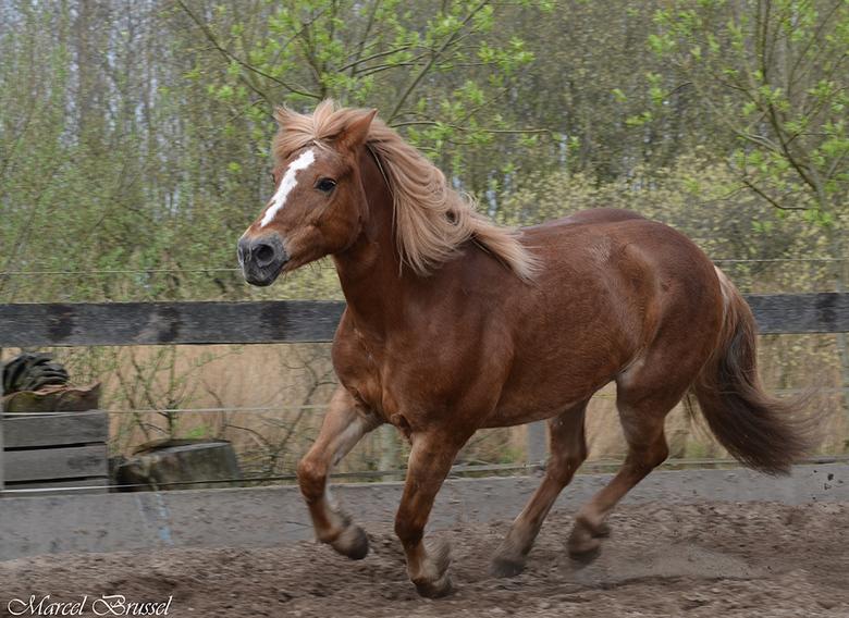 Rox - Ons paardje Rox.