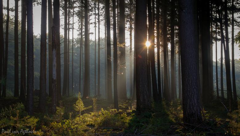 Morning Sun - Speulderbos in de morgen
