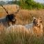 Vreemde schapen in Friesland