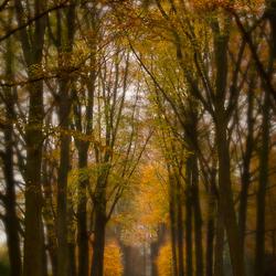 Herfst in Graven Allee