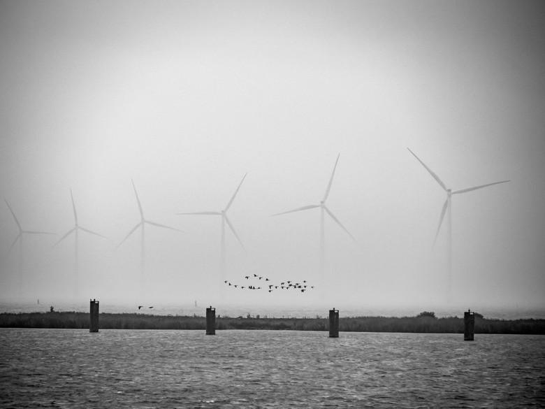 Flows - Ochtendmist op het IJsselmeer