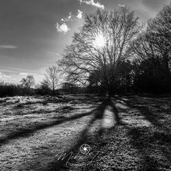 big shadow