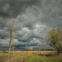 De storm trekt voorbij....(Oostvaardersplassen)  (uitvergroot het mooist)