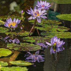 Reflectie in de tropische kas