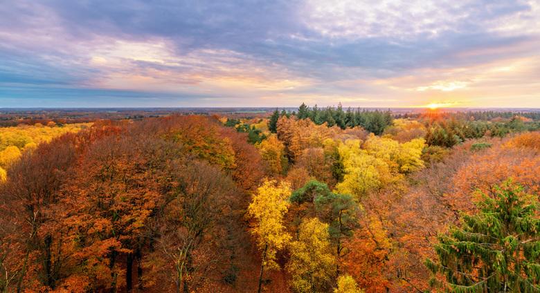 Herfst, wat ben je mooi! - Na een grauwe dag gisteren ontdekte ik toch nog wat gaten in de bewolking. Snel de auto in en 10 minuten voor zonsondergang