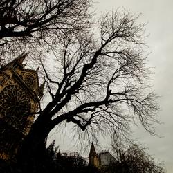 Bij de Notre-Dame