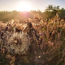 Spinnenweb in de ochtendzon