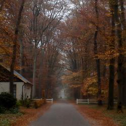 Herfst in de Graven Allee 3