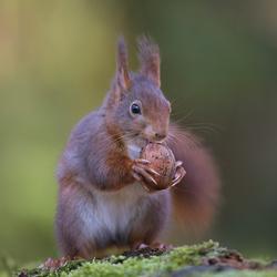 Een heerlijke noten ontbijt.