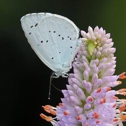 Vlinder in de voortuin