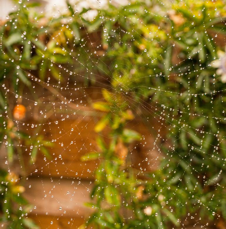 Spinnenweb met regendruppels