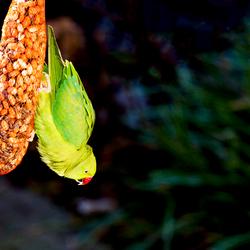 Tropische vogel_5.jpg