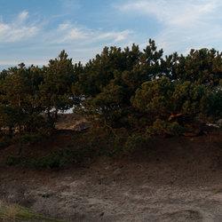 Noorwijkse duinen
