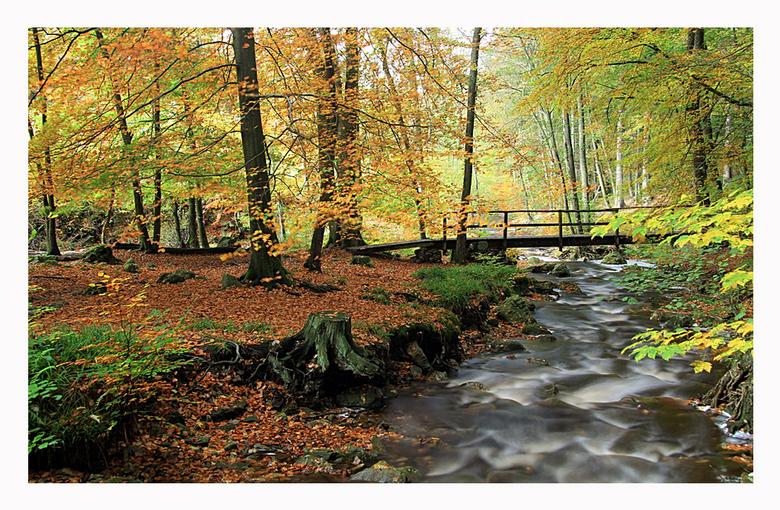 La Hoëgne,Ardennen 4 - Nog eentje van het riviertje La Hoëgne in de Ardennen.<br /> Bedankt voor jullie reacties op mijn vorige foto&#039;s<br /> Gr