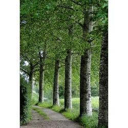 Two Times Three Trees