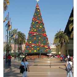Kerst- en palmbomen