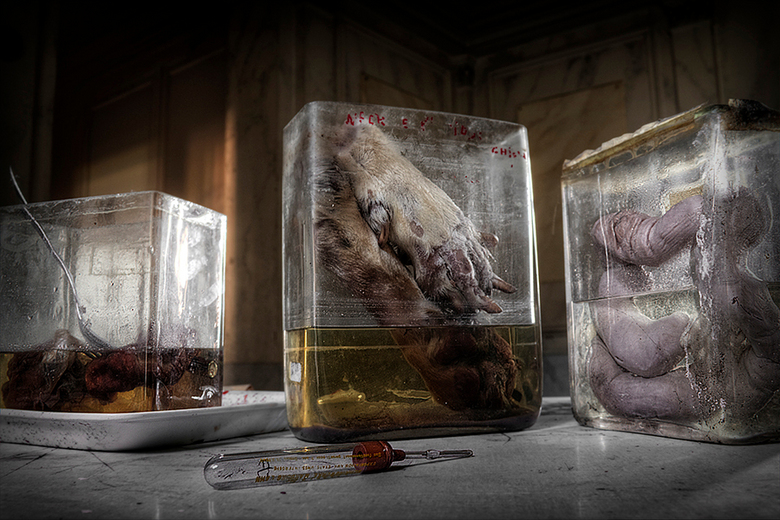 Horror Labs - Amazingly beautiful building with the remains of dead animals