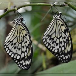 Vlindertuin Berkenhof 3