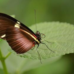 nectar on the tongue