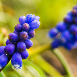 Groen en blauw in de natuur