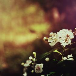 DSC_05 White Flower