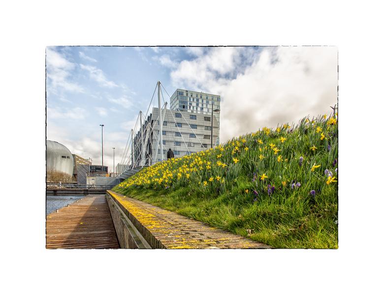 Lente in Almere - De lente in aantocht in Almere.