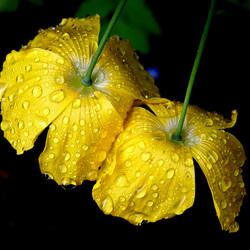 a bloem2.jpg