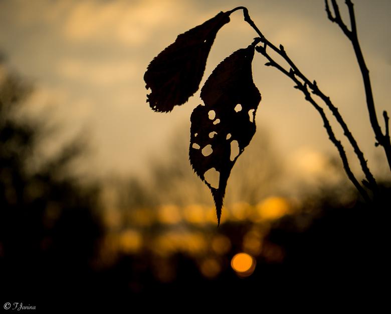Heerlijk avondje - Avondje van Sinterklaas!<br /> <br /> Nog net gezien voor de zon achter de bomen verdween.<br /> <br /> Een fijne avond en dank