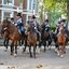 HPL_1106-Onrustige Paarden