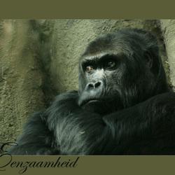 eenzame gorilla in dierentuin