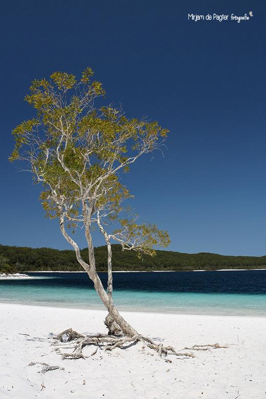 Verlangen naar... (2) - Lake McKenzie, Fraser Island, Australie. Gemaakt tijdens mijn backpack rondreis door Australie alweer een aantal jaar geleden.