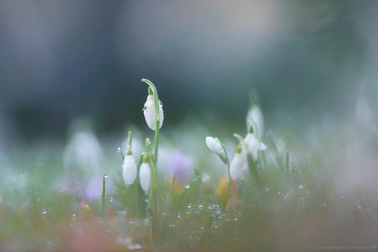 Spring is here - Vanochtend met een aantal zoomers Amelisweerd in getrokken op zoek naar het voorjaar. <br /> Dat was niet zo moeilijk, velden vol me