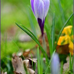 Kleurrijk voorjaar