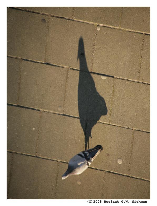 Vreemde Vogel - Voor rariteiten hoef je bij mij niet ver de deur uit.. dit soort vreemde vogels zijn verre van uitzonderingen in mijn straat. <img  sr