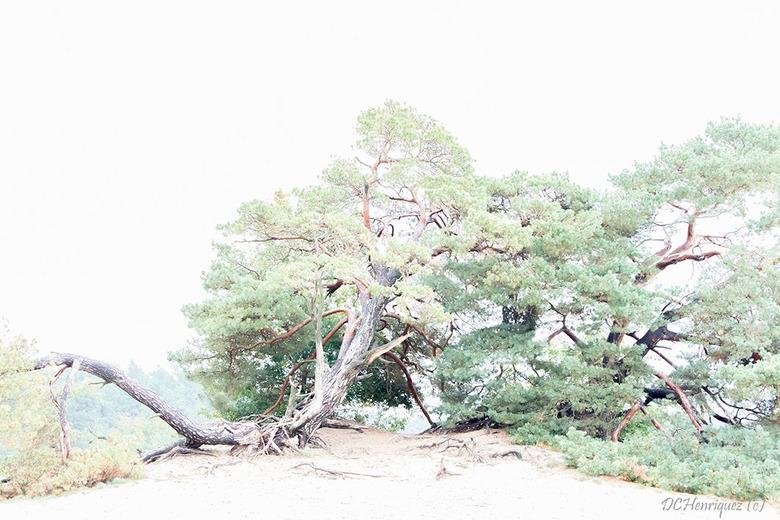 Boomstam 2 - Een andere compositie van dezelfde emblematische boom met meer groen links.<br /> <br /> Bedankt voor de feedback en reacties bij mijn