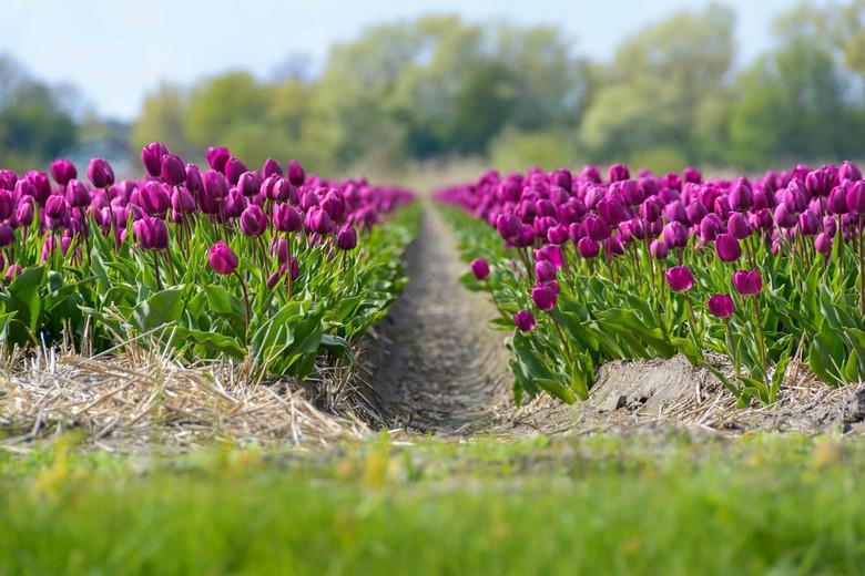 """Purplex - De kracht van een polarisatiefilter... betere kleuren en minder reflecties...<br /> <br /> (c) 2017 <a href=""""www.Martijnvandernat.nl"""">www."""