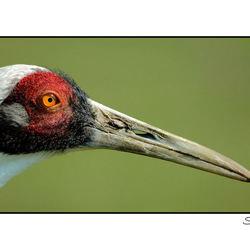 V.Z.N. ofwel:vogel zonder naam