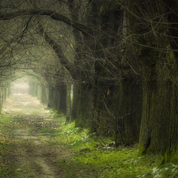 Fairy Road part II.