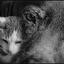 leven als kat en hond.............