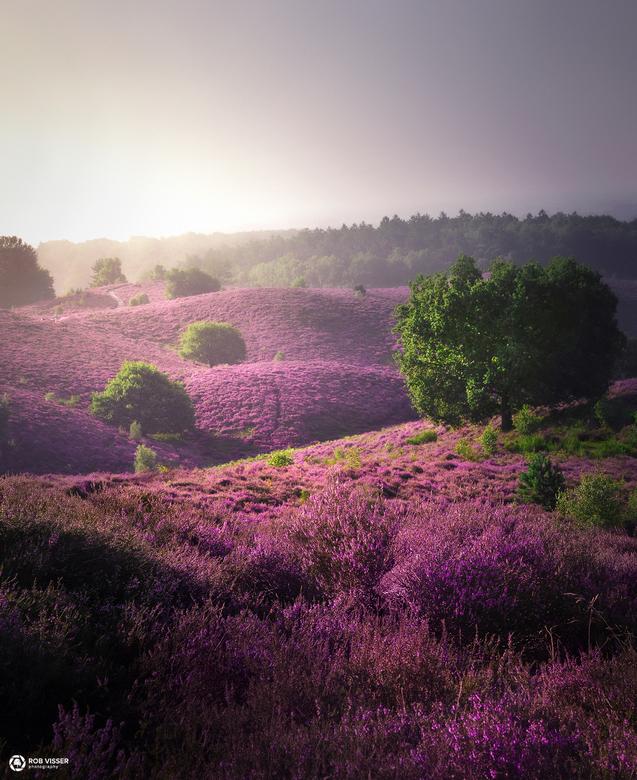 Purple path - Posbank 2 jaar geleden