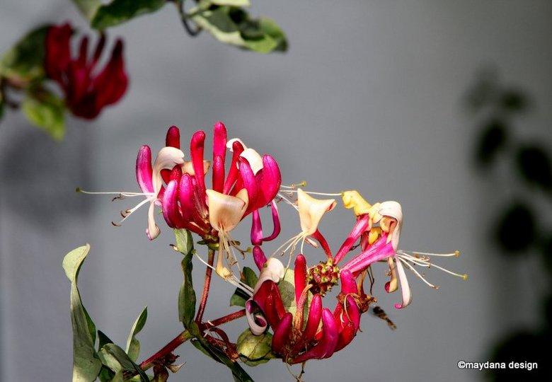 Rest van de late zomer! - Het waren de laatste bloemen van een mooie zomer 2012