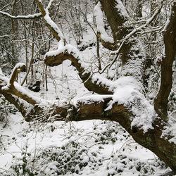 winterse boom in Schoorl