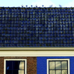Gulls on a hot tin roof