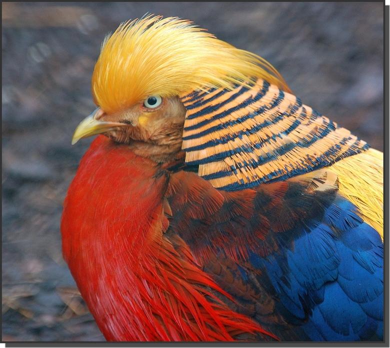 Afbeeldingsresultaat voor kleurige vogel