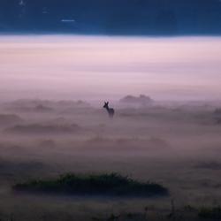 Ree bij een mistige zonsondergang