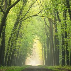 Fresh green lane