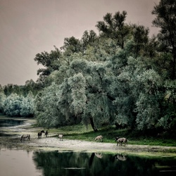 'Paardenparadijs'